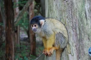 Cómo utilizar mono encuesta para evaluar las clases en línea