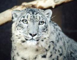 Cómo utilizar tareas repetitivas en Snow Leopard