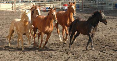 Juegos de caballos en línea para niños