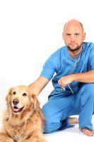 Cómo poner mi veterinaria clínica en línea