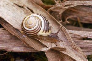 Cómo hacer una espiral de Fibonacci en Photoshop